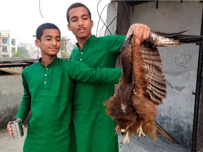 The eagle trapped in the cat got life   मांजात अडकलेल्या गरुडाला मिळाले जीवनदान