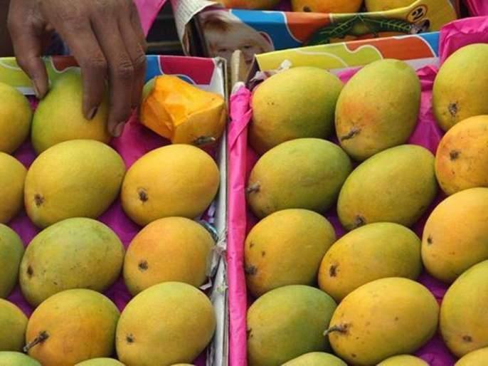 No customers found; The king of fruit also corona   ग्राहकच मिळेनात; फळांच्या राजालाही कोरोनाची बाधा