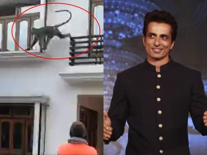 Video: An Sonu Sood catches a monkey in the net after requesting by villagers | Video : अन् सोनू सूदने पकडून दाखवलं, गावात उच्छाद मांडणारं वानर 'जाळ्यात'