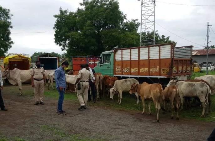 Life saving to 27 cattle being taken for slaughter | कत्तलीसाठी नेण्यात येत असलेल्या २७ गुरांना जीवनदान