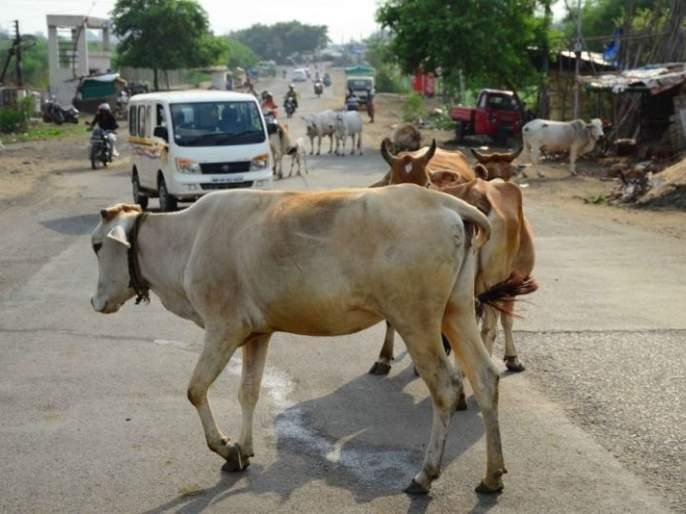 Stray cattle owners punished in Nagpur | नागपुरात मोकाट जनावरांच्या मालकांना चाप: १० मालकांविरुद्ध गुन्हे दाखल