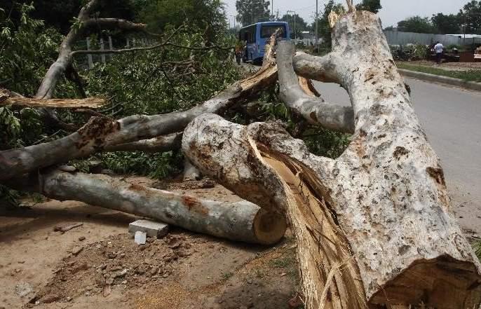 cut down trees for the Shivdi - Nhashcheva, Santa Cruz elevated route | शिवडी- न्हावाशेवा, सांताक्रुझ उन्नत मार्गासाठी वृक्ष तोडणार