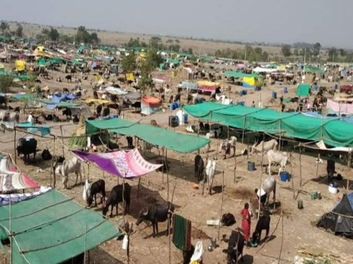 'Feeding of fodder for BJP-Shiv Sena workers' | 'चारा छावण्या भाजप-शिवसेना कार्यकर्त्यांसाठी कुरण'