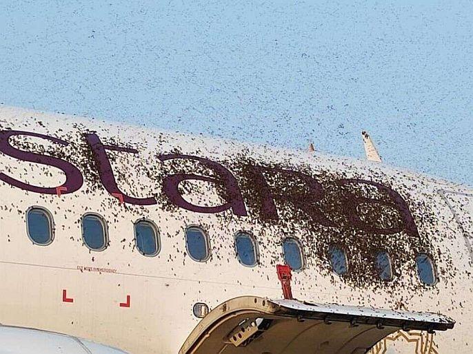 omg when bee attack two flights at kolkata airport | काय सांगता? विमानावर मधमाशांचा हल्ला, फ्लाईट एक तास लेट!