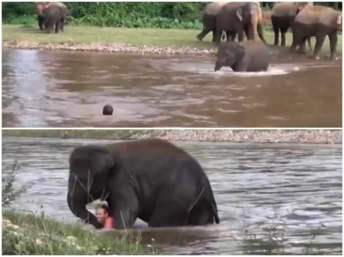 Kerala Pregnant Elephant Death: What did the baby elephant do when he saw the drowning man? | Kerala Pregnant Elephant Death: तुम्ही माणुसकी सोडली पण आम्ही नाही; बुडणाऱ्या माणसाला पाहून हत्तीच्या पिल्लानं काय केलं? पाहा