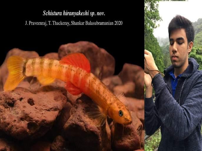 Another research by CM Chiranjeev Tejas Thackeray; new species of fish found in 'Hiranyakeshi' | मुख्यमंत्री उद्धव ठाकरेंच्या मुलाचं आणखी एक संशोधन; तेजसनं शोधली माशाची नवीन प्रजाती