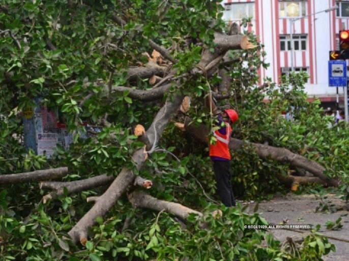 Permission to cut only if trees are planted; The High Court imposed the condition on MMRDA   झाडे लावली तरच कापण्याची परवानगी;उच्च न्यायालयाने एमएमआरडीएला घातली अट