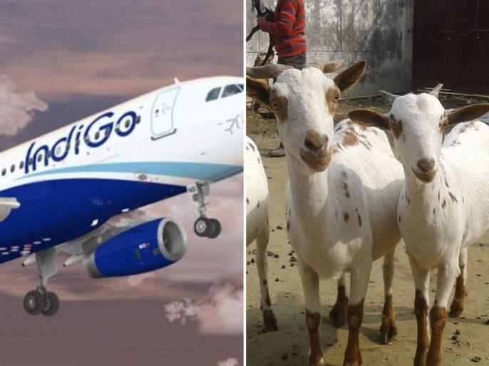 Lockdown: A laborer sells a goat and buys a plane ticket; But the flight was canceled pnm | Lockdown: बकरी विकून मजुरानं खरेदी केलं विमानाचं तिकीट; पण फ्लाईट झाली रद्द मग आता...