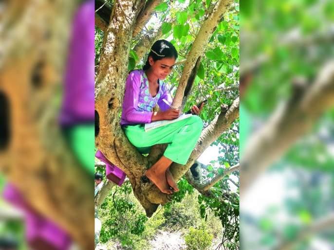 Student exercise due to lack of network in the village; Online education can be done sitting on a tree | गावात नेटवर्क नसल्याने विद्यार्थ्यांची कसरत;झाडावर बसून घेतायेतऑनलाइन शिक्षण
