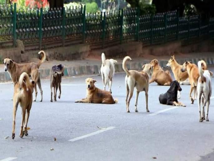 Alibag Municipality sterilized, but the terror of the Maekat dogs persisted | अलिबाग नगरपालिकेने निर्बीजीकरण केले, मात्र माेकाट कुत्र्यांची दहशत कायम