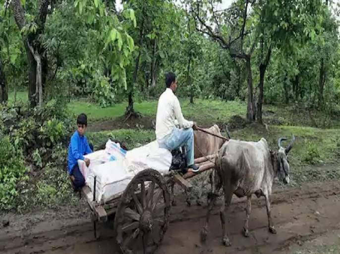 The teacher himself drove a bullock cart and reached for the student with book | कौतुकास्पद! बैलगाडीतून शाळांमध्ये पुस्तकं पाठवतायेत 'हे' शिक्षक; पण अशी वेळ त्यांच्यावर का आली?