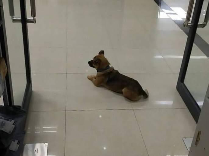 Loyal Dog waiting outside at hospital for his owner, Nagpur Story | तेरी मेहरबानियां! रुग्णालयाबाहेर चकरा मारणाऱ्या कुत्र्याला हुसकावल्यानंतरही गेला नाही, कारण...