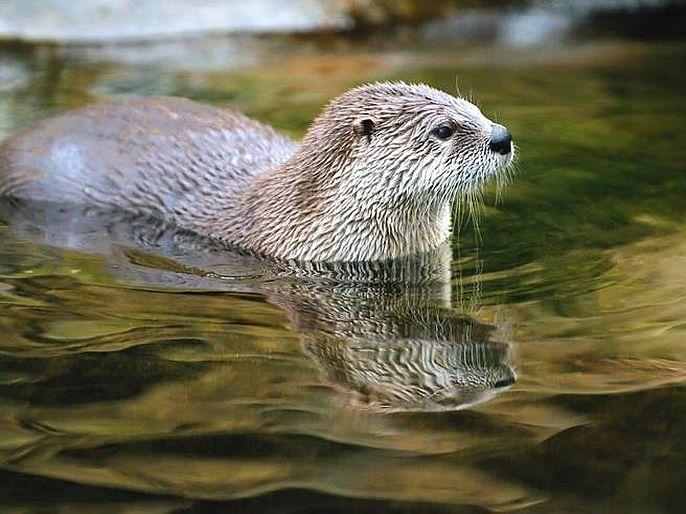 An aquatic animal named Ud attacks young people in the patalganga river   पाताळगंगेत पोहायला जाणाऱ्यांनो, सावधान! उद नावाच्या जलचर प्राण्याचा तरुणांवर हल्ला