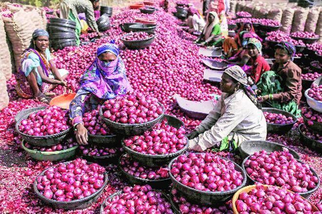 Onion prices continue to rise in the state; 85 in Mumbai and Rs. 121 in Junnar Alleppey Market Committee | राज्यात कांद्याची दरवाढ सुरूच; मुंबईत ८५ तर जुन्नर आळेफाटा बाजार समितीमध्ये १२१ रुपये किलो