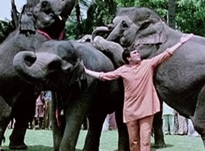 'Hathi My Partner' remake announced! Rajesh Khanna's role to make 'this' artist !! | झाली 'हाथी मेरे साथी'च्या रिमेकची घोषणा! 'हा' कलाकार साकारणार राजेश खन्नांची भूमिका!!