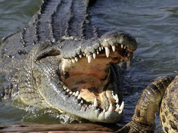 15 year old brother battles 14 foot long crocodile to save 12 yo sister from its jaws in Philippines | लहान बहिणीचा जीव वाचवण्यासाठी १५ वर्षीय भावाचे मगरीसोबत दोन हात!