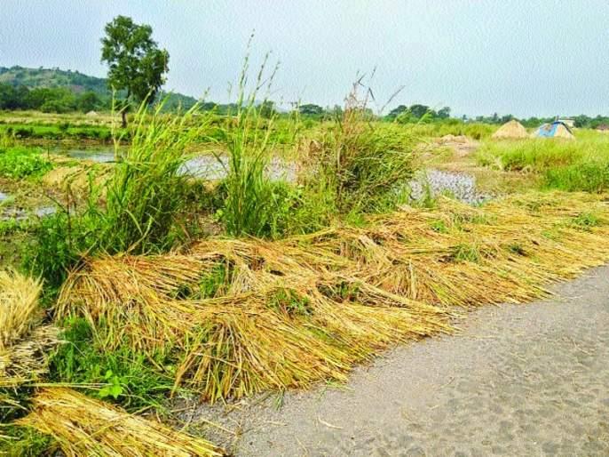 Estimates of loss of 19 lakh hectares of crop in the state | राज्यात ९० लाख हेक्टर पिकांच्या नुकसानीचा अंदाज