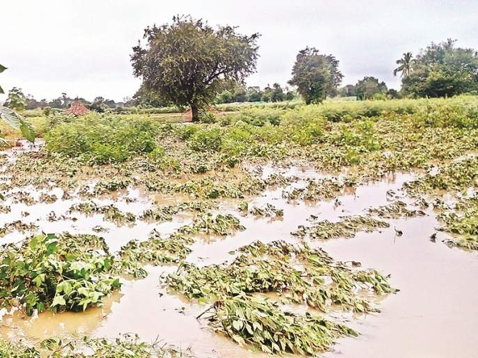 Farmers in Marathwada need assistance of Rs 2904 crore relief fund for wet drought | मराठवाड्यात ओला दुष्काळ; शेतकऱ्यांना २,९०४ कोटी रुपयांच्या मदतीची गरज
