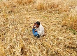 Damage of four lakh 3 thousand hectares of crop | चार लाख ८० हजार हेक्टर पिकांचे नुकसान
