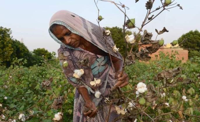 Crop insurance benefits for 2.68 lakh farmers in Akola district? | अकोला जिल्ह्यात २.६८ लाख शेतकऱ्यांना मिळणार पीक विम्याचा लाभ?