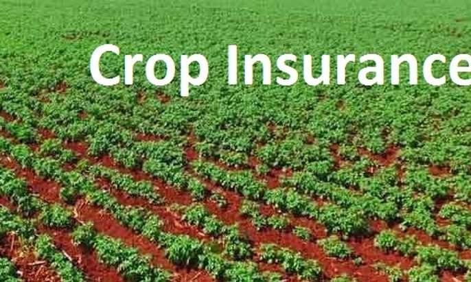 Washim District does not get crop insurance company for Rabbi | रब्बीसाठी वाशिम जिल्ह्यास पीकविमा कंपनी मिळेना