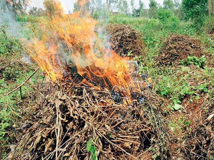 Crop insurance found in crisis in 3 districts of the state! | राज्यातील १० जिल्ह्यांमध्ये पीक विमा सापडला संकटात!