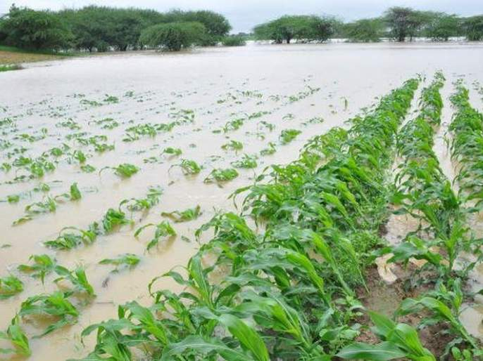 74,000 farmers in Akola district lose crops on 51,000 hectares!   अकोला जिल्ह्यात ७४ हजार शेतकऱ्यांचे ५१ हजार हेक्टरवरील पिकांचे नुकसान!