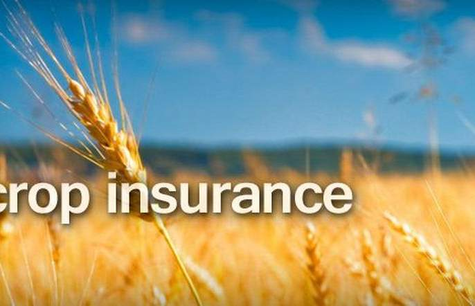 Crop Insurance Scheme: Hardwork to run properly | पीक विमा योजना: तारेवरची कसरत!