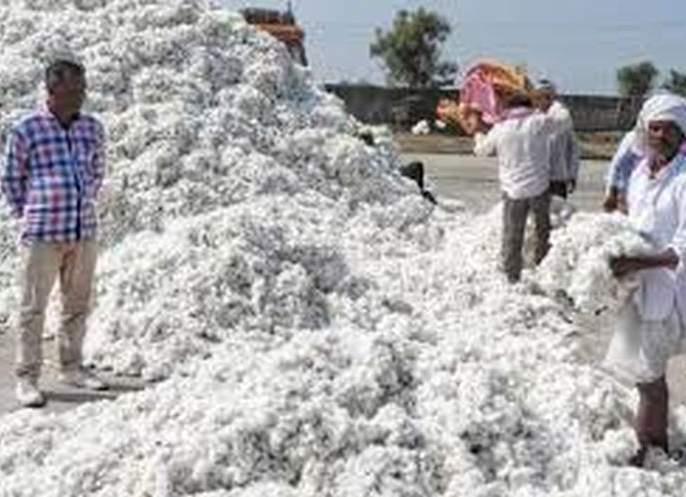 Registration for sale of cotton before October   कापूस विक्रीसाठी ऑक्टोबरपूर्वीच नोंदणी