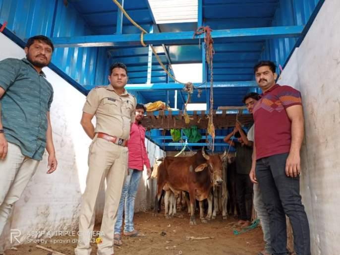 21 lakh worth of goods seized along with cattle trucks | गुरांची वाहतूक करणाऱ्या ट्रकसह २१ लाखांचा मुद्देमाल हस्तगत