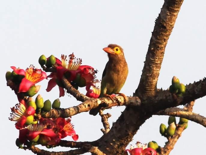 Foreign birds gather at Koranur Dam just like Ujani; There are 19 different species of birds | उजनीप्रमाणेच कुरनूर धरणावर परदेशी पक्ष्यांचा मेळा; ९० विविध प्रजातीचे पक्षी दाखल