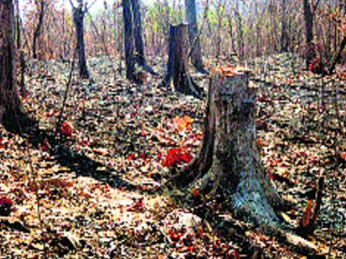 Mulund accident; Fake report given by tree pruning contractor | मुलुंड दुर्घटना; वृक्ष छाटणीचा ठेकेदाराने दिला बोगस अहवाल
