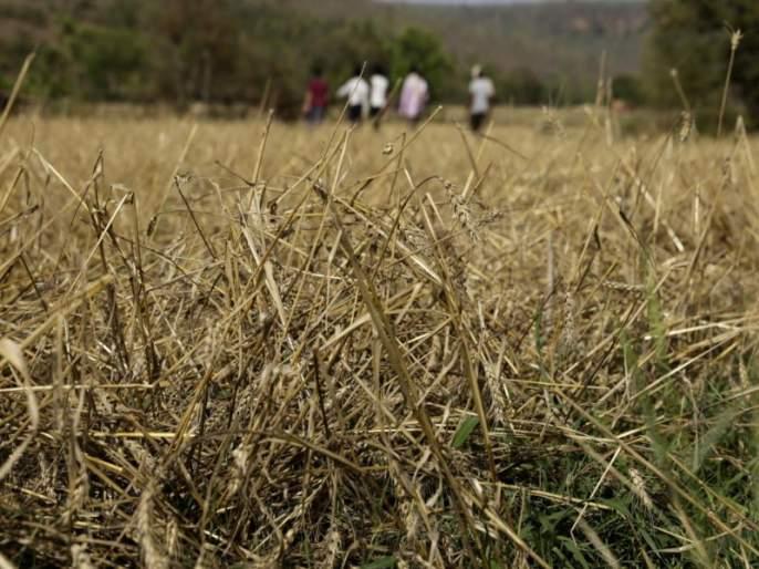 Estimates of loss of 90 lakh hectares of crop in the state | राज्यात ९० लाख हेक्टर पिकांच्या नुकसानीचा अंदाज