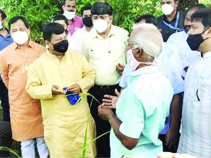 Inspection of paddy fields damaged by return rains in Kankavali | कणकवलीत परतीच्या पावसाने नुकसान झालेल्या भातशेतीची पाहणी