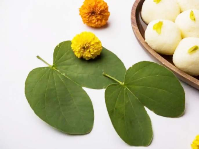 Navratri 2020: Apatya leaves are important for Dussehra. But why Find out the story behind it! | Dussehra 2020 :दसऱ्याला आपट्याच्या पानाला महत्त्व असते. पण का? जाणून घ्या त्यामागची कथा!