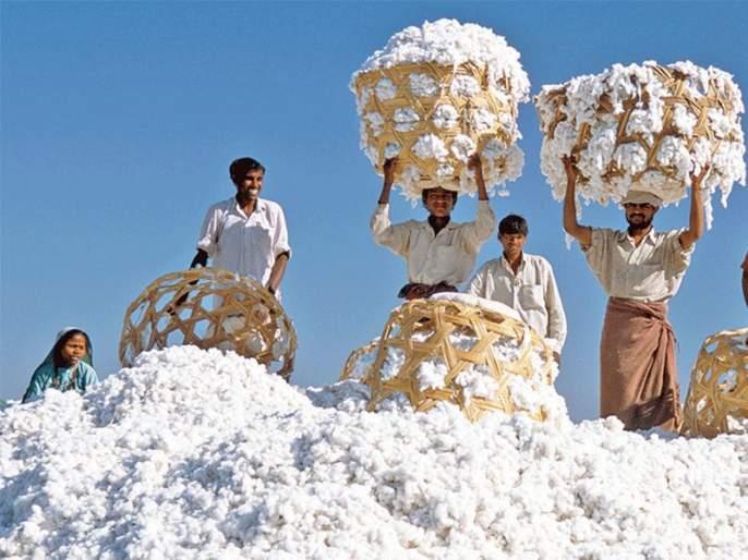 Margin mix in CCI's cotton procurement   'सीसीआय'च्या कापूस खरेदीत 'मार्जीन'चा घोळ