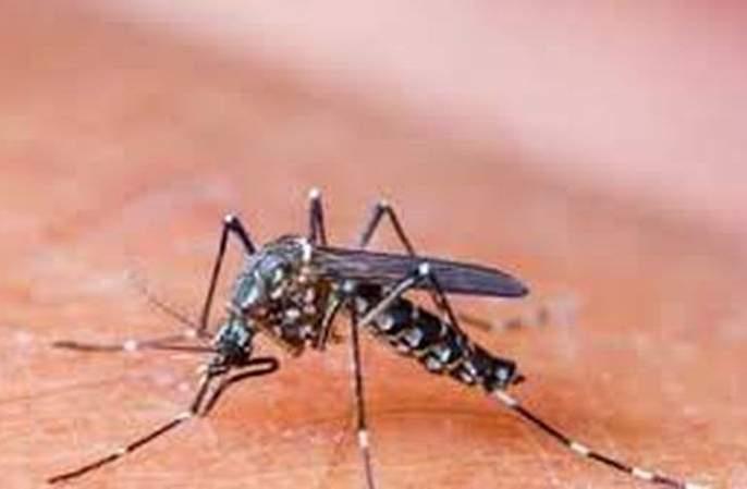 Danger of dengue along with corona! | कोरोनासोबतच डेंग्यूचाही धोका!