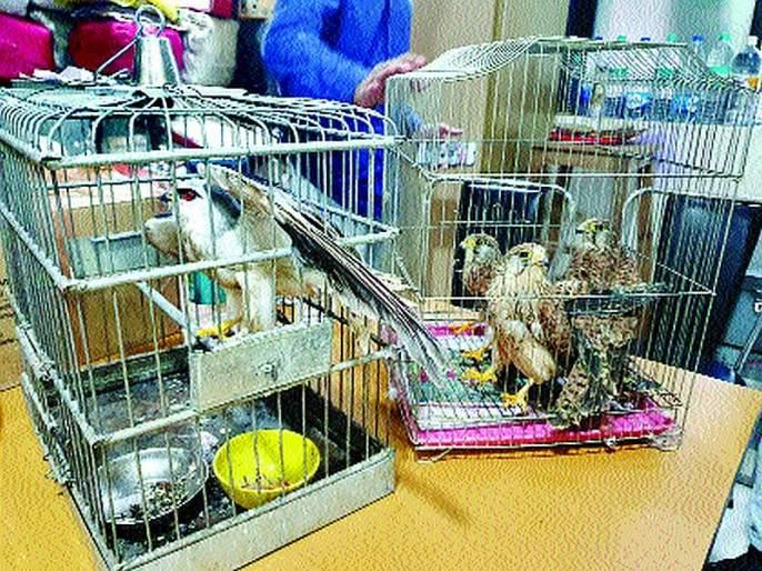 Possession of wildlife brought from Karnataka; The accused arrested in Thane   कर्नाटकातून आणलेले वन्यजीव ताब्यात; आरोपीस ठाण्यात अटक