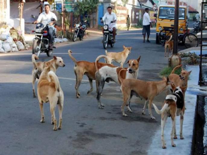 nagaland government bans trade and sale of dog meat   देशातील 'या' राज्यात कुत्र्याच्या मांसची विक्री, सरकारने घातली बंदी