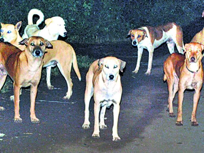 fear of dog In Vasco area   वास्को व परिसरात महिन्याला १०० हून अधिक नागरिकांचा कुत्रे घेतात चावा