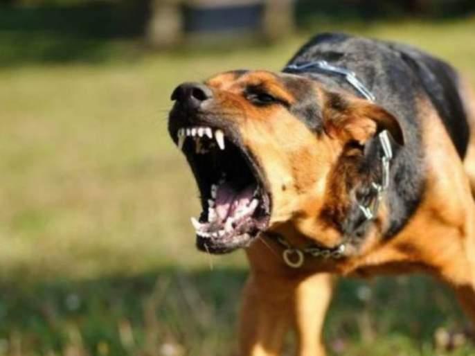 every year 18 deaths Rabies due to unconcious about rabies | दुर्लक्षामुळे रेबिजने दरवर्षी होतात १८ मृत्यू