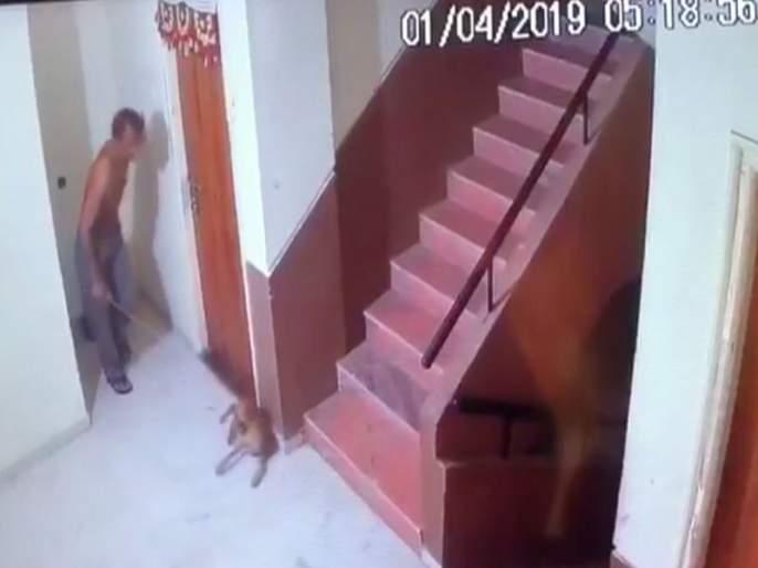 Nude dog attacked the puppy; Mhrsul police filed a complaint | भटक्या श्वानाच्या पिल्लावर हल्ला भोवला; म्हसरूळ पोलिसांत गुन्हा दाखल