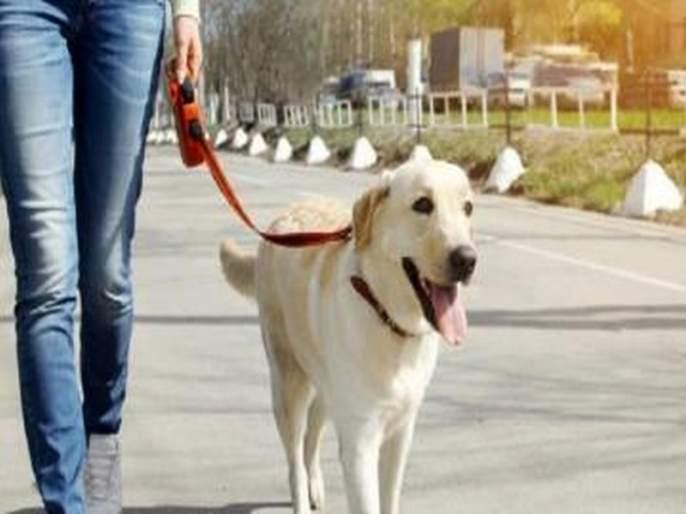 Pet dogs killed in tempo shock; Police register crime on driver | टेम्पोच्या धडकेत पाळीव श्वान ठार; पोलिसांकडून चालकावर गुन्हा दाखल
