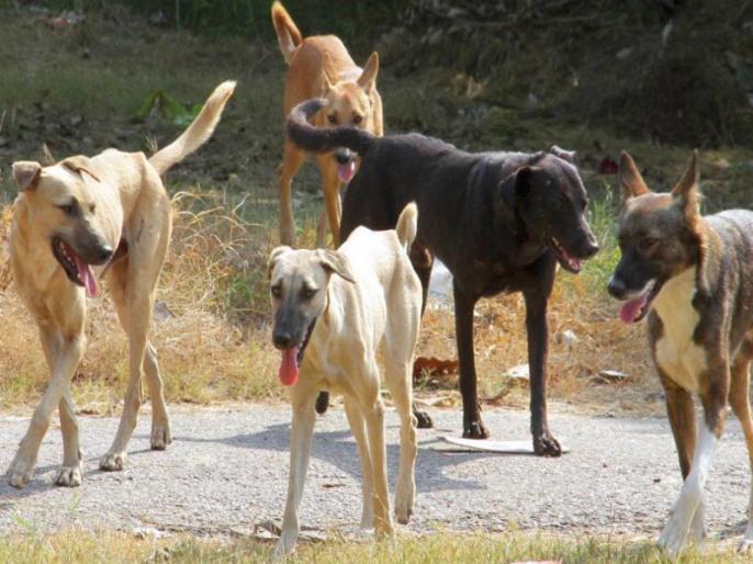 A female police officer's dogs break down in Nagpur; Neighborhood Dispute Resolution | नागपूरमध्ये महिला पोलीस अधिकाऱ्याचे कुत्र्यांनी तोडले लचके; शेजारणीने काढला वादाचा वचपा