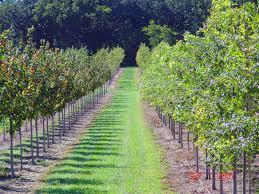 Live a tree, get a thousand rupees, farmers will get a subsidy for the year   एक झाड जगवा, हजार रुपये मिळवा, शेतकऱ्यांना मिळणार वर्षाला अनुदान