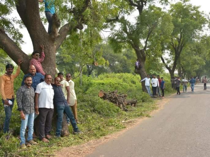 The Chipko movement saved hundreds of trees on the Akola-Barshitakali route   'चिपको-आंदोलन'मुळे वाचले अकोला-बार्शीटाकळी मार्गावरील शेकडो वृक्ष