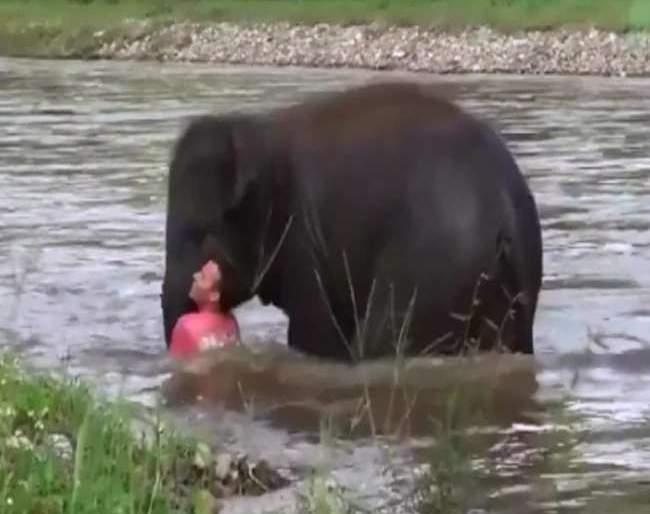 Video: baby elephant plunges into river after seeing drowning man   Video : 'हाथी मेरे साथी', बुडणाऱ्या माणसाला पाहून वाहत्या पाण्यात उतरले हत्तीचे पिल्लू