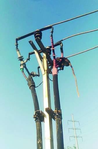 Turned off the power supply to save the monkey | माकडाला वाचविण्यासाठी बंद केला वीज पुरवठा