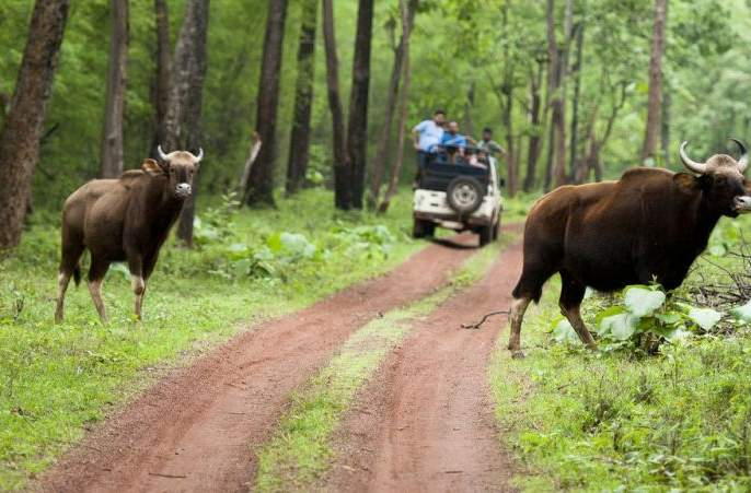 Forest tourism continues, but response is low | वन पर्यटन सुरू, मात्र प्रतिसाद कमीच