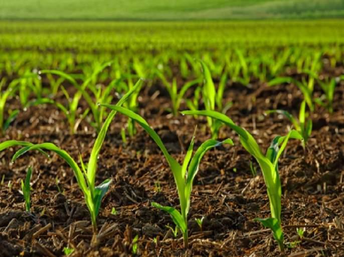 Bio Diversity Day: The role of crop diversity is important for the survival and development of humans | Bio Diversity Day : मानवाच्या अस्तित्व आणि विकासासाठी पीक वैविध्याची भूमिका महत्त्वाची